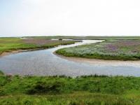 Norderney Salzwiese